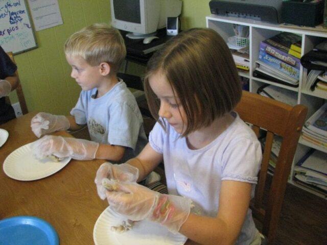 dissecting chicken bones
